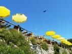 Viel los in der Luft!: Vögel und Gleitschirme im Flugkonzert.